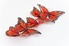 motyle monarchiczni Zdjęcie Royalty Free