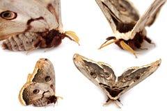 motyle motyli Zdjęcia Royalty Free