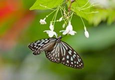 Motyle na kwiatach fotografia royalty free