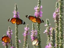 Motyle na roślinie w ich naturalnym siedlisku zdjęcie stock