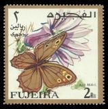 Motyle, Nymphalid motyl, Eumenis tewfiki Zdjęcie Stock