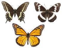 motyle odizolowywali trzy Zdjęcie Stock