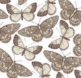 Motyle. Piękny tło. Fotografia Royalty Free