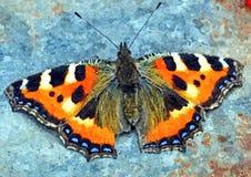 Motyle są kwiatami który drzał wiatr Rysunkowa akwarela na papierze Naiwna sztuka Obraz akwarela na papierze ilustracja wektor
