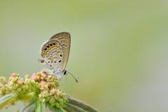 Motyle Taiwan fotografia stock