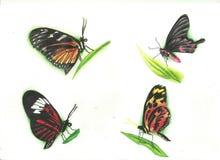 Motyle tatuują set Zdjęcia Stock