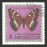Motyle, Topolowy Admiral Fotografia Royalty Free