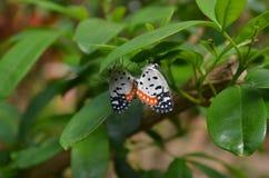 Motyle w miłości fotografia royalty free