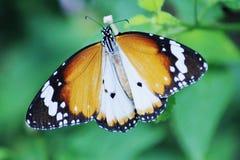 Motyle w parku Obrazy Royalty Free