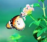 Motyle w parku Zdjęcia Stock