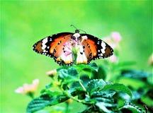 Motyle w parku Zdjęcie Stock