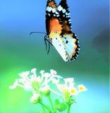 Motyle w parku Obrazy Stock