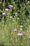 Motyle w polu fotografia stock