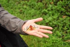 Motyli ścierwo w ranku na turysta ręce z lasowym tłem w parku narodowym, Tajlandia Obrazy Stock