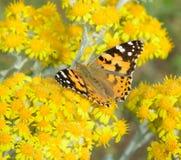 Motyli Aglais urticae Obrazy Royalty Free