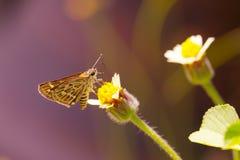 Motyli chwytający trawa kwiat Obraz Stock