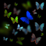 Motyli Colage ilustracja wektor