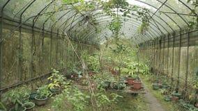 Motyli dom w górze Tajwan także uwypukla insekty i arthropods zbiory wideo