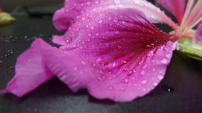 Motyli drzewo kwitnie w ogródzie Zdjęcia Royalty Free
