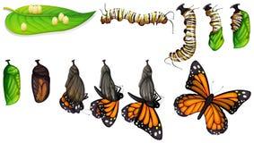 Motyli etap życia ilustracja wektor