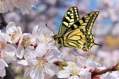 Motyli i biały kwiat Obrazy Stock