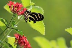 Motyli karmienie Fotografia Stock