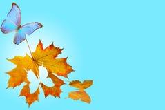 motyli klonowy ślizganie Zdjęcie Royalty Free