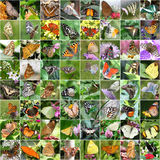 Motyli kolaż Obrazy Stock