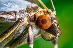 Motyli krańcowy zbliżenie Zdjęcia Stock