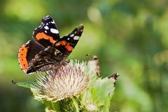 motyli kwiat Obrazy Royalty Free