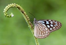 motyli kwiat Zdjęcie Stock