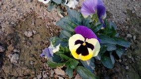 Motyli kwiat Lucknow, Uttar Pradesh Fotografia Stock