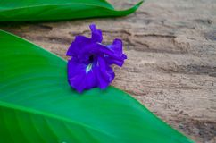 Motyli kwiat na bananowym liściu i starym drewnie Zdjęcie Royalty Free