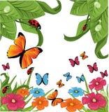 motyli kwiaty Obrazy Royalty Free