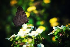 Motyli lato natury tło makro- zdjęcia royalty free