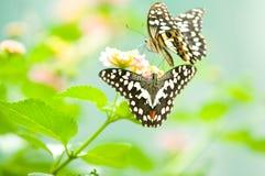 motyli liść Zdjęcia Stock