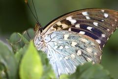 motyli makro- super Zdjęcia Royalty Free