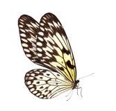 Motyli makro- tło Obrazy Royalty Free