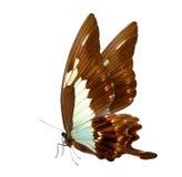 Motyli makro- tło Zdjęcie Royalty Free