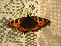 Motyli obsiadanie na zasłonie Obraz Royalty Free