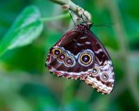 motyli oczy Fotografia Stock
