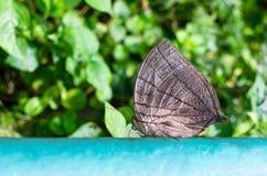 Motyli odpoczywać na poręczu Fotografia Stock