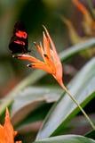 Motyli odpoczywać na kwiacie Fotografia Stock