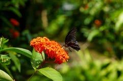 Motyli odpoczywać na kwiacie Zdjęcia Royalty Free