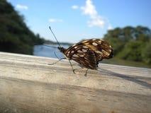 Motyli odprowadzenie na drewnianym whit niebie chmurnieje backgroung Zdjęcia Royalty Free
