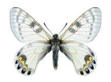 Motyli Parnassius autocrator Obrazy Royalty Free
