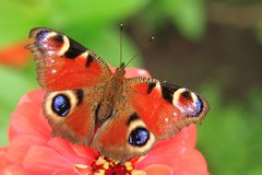 Motyli paw w naturze Obraz Stock