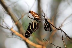 Motyli spać Fotografia Royalty Free