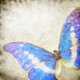 motyli stary papier Obraz Stock