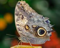 Motyli szczegół Zdjęcie Stock